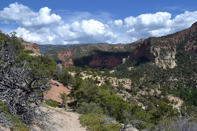 along the edge of the canyon