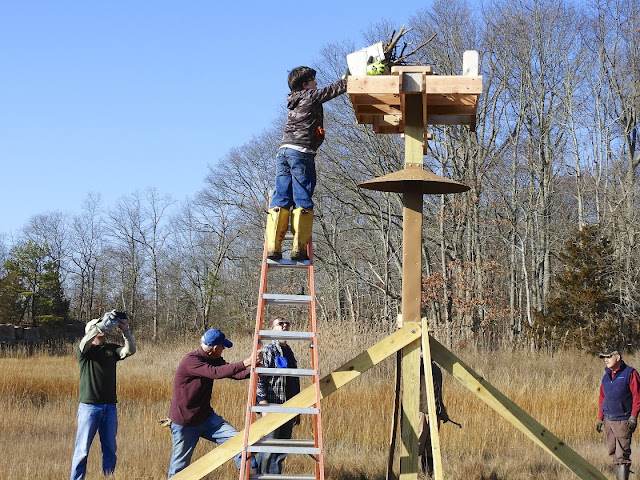 Killams Point Osprey Platform Replacement, December 5, 2015 - Platform%2BKillams%2B1631.jpg