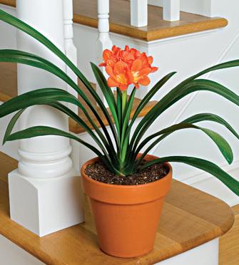 10 loại cây trồng phong thủy tạo không gian trong văn phòng