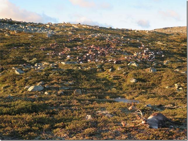 300 rusa dan anak sapi mati kena petir