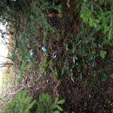 2016-04-09 Umweltsäuberung - upload_-1
