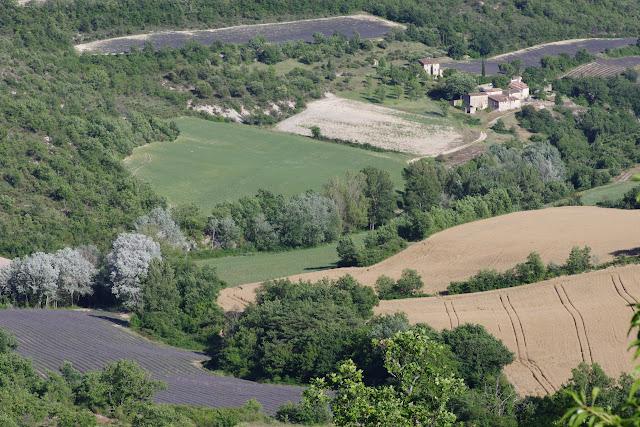 Le vallon des Fouix depuis les Hautes-Courennes (550 m), Saint-Martin-de-Castillon (Vaucluse), 19 juin 2015. Photo : J.-M. Gayman