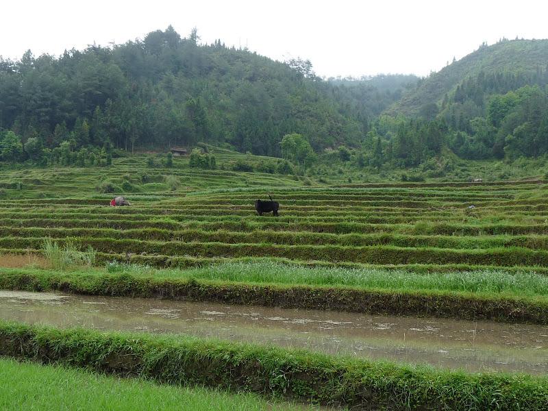 Chine .Yunnan,Menglian ,Tenchong, He shun, Chongning B - Picture%2B788.jpg