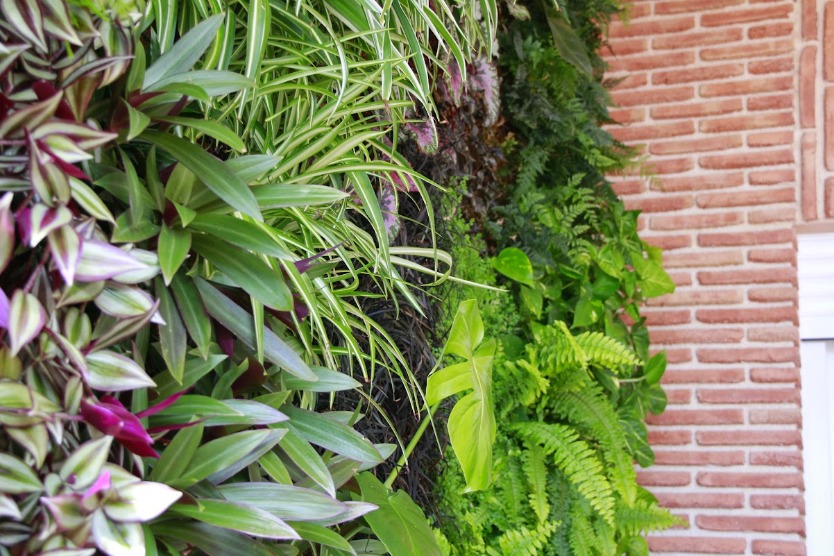 Beneficios de los jardines verticales alicante forestal for Plantas verticales de interior