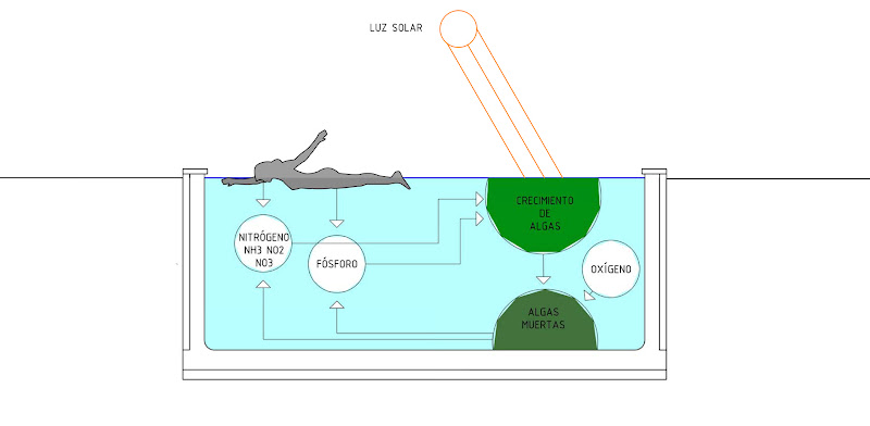 Eutrofización esquema