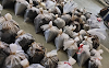 234 kgs Of Opium Seized In The Biggest Drug Raid in Rajasthan
