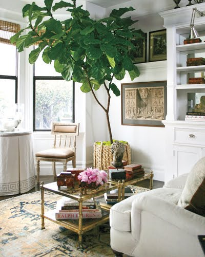 Can Be Fickle About Their Placement So Here S Hoping Mine Likes Its New Window Are More Examples Of Fiddle Leaf Figs In Designer Interiors