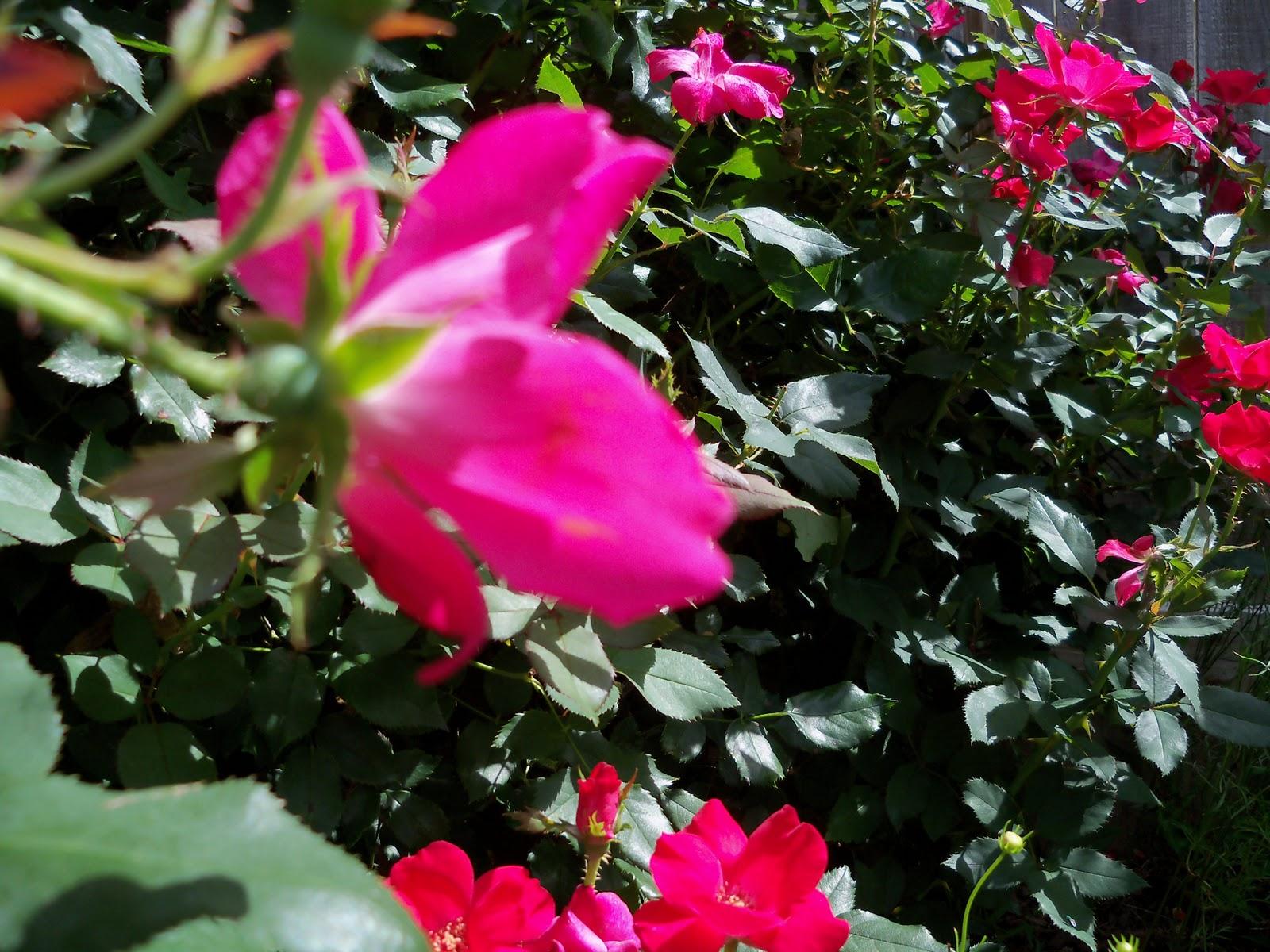 Gardening 2010, Part Three - 101_3816.JPG