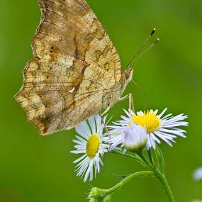 my wild butterflies by Irfan Maulana - Nature Up Close Flowers - 2011-2013