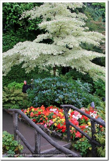 160906_Butchart_Gardens_0036