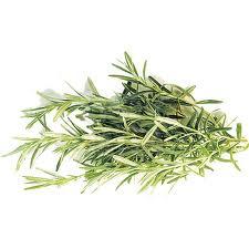 Informatii medicale despre pelin (Artemisia absinthium)