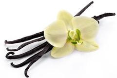 Vanilla Rework 1 57334.1416528458.474.340 thumb%25255B1%25255D - 【リキッド】Nicoticket(ニコチケット)全商品説明の翻訳完全補完計画