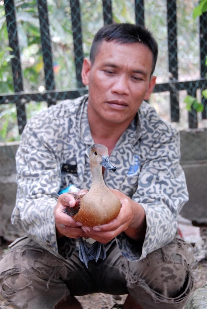 Mô hình nuôi chim le le sinh sản - 574d4bda20841