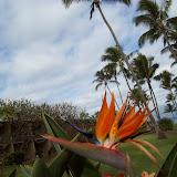 Hawaii Day 6 - 100_7643.JPG