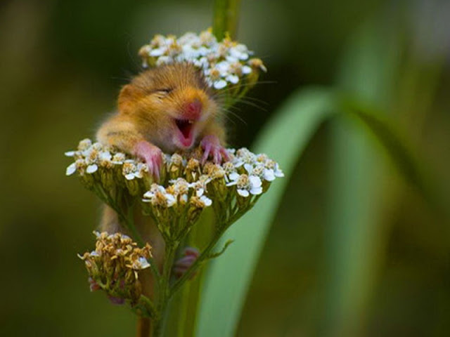 Foto binatang yang Super imut dan Menggemaskan  Foto-Foto binatang yang Super imut dan Menggemaskan