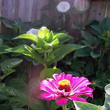 Gardening 2014 - 116_3424.JPG