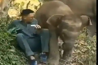 baby-elephant-kick-the-young-man