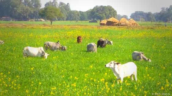किसान है खतरे में कैसे  hindi news today