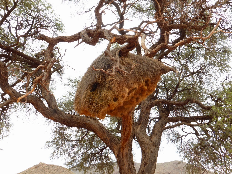 Community Weaver's Nest