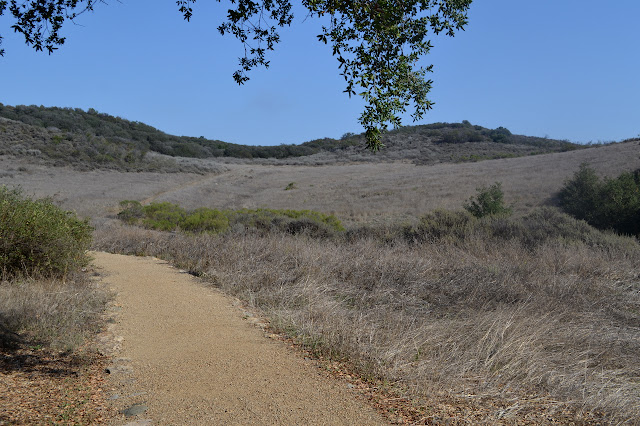 groomed trail in a meadow