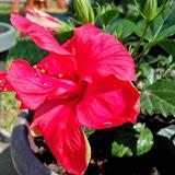 Gardening 2014 - 116_1542.JPG
