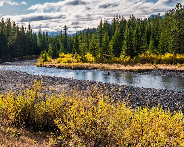 Adventurous Tastes| A river and fall colors at Yellowstone