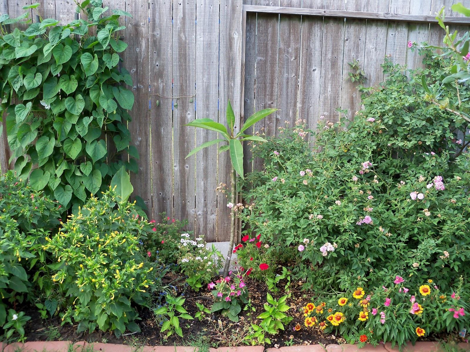 Gardening 2011 - 100_8807.JPG