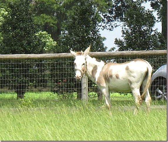 horseIMG_0581