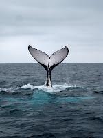 Lotsa whales!