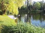 Die Schwanenfamilie im Wasserpark