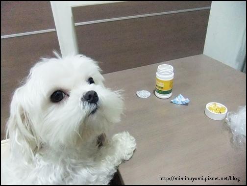 狗狗急欲想吃狗狗營養保健品-黃金海寶油樣