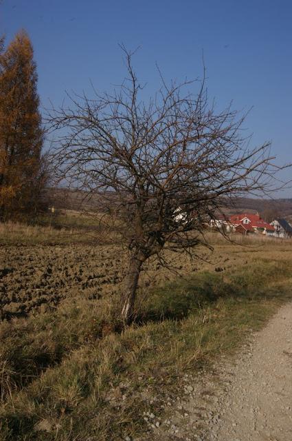 CERGOWSKA - DSC06308_1.JPG