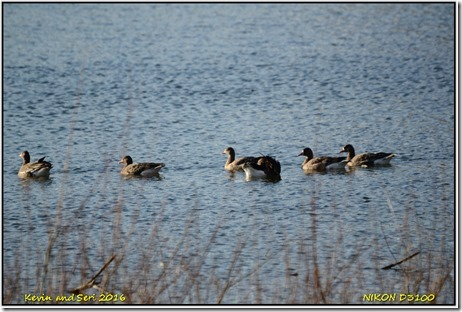 Draycote Waters - February