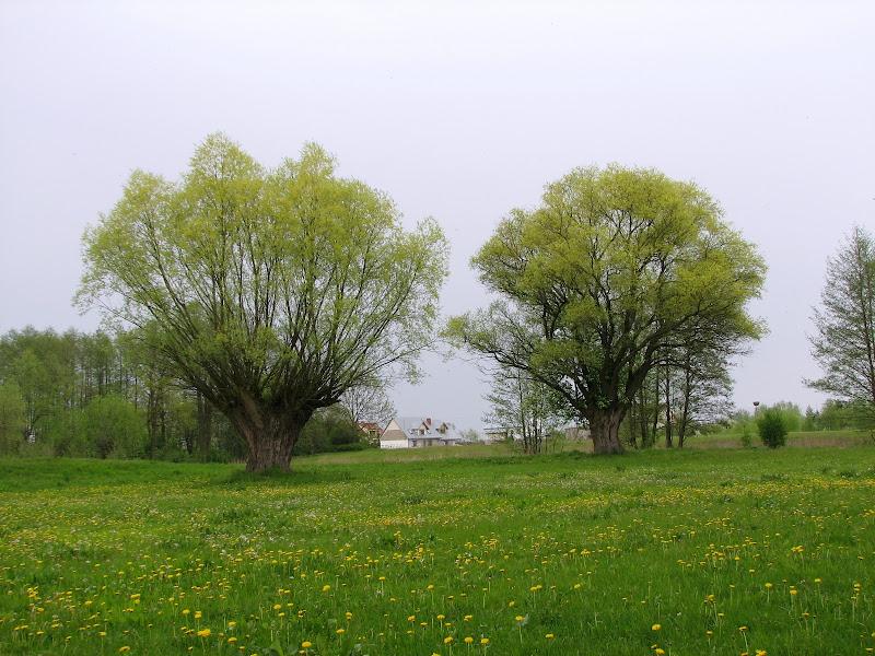 Wycieczka do Ciechanowa - img_1685.jpg