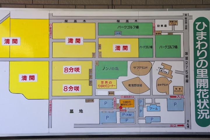 写真:ひまわりの里開花状況 8月8日(水)09:00