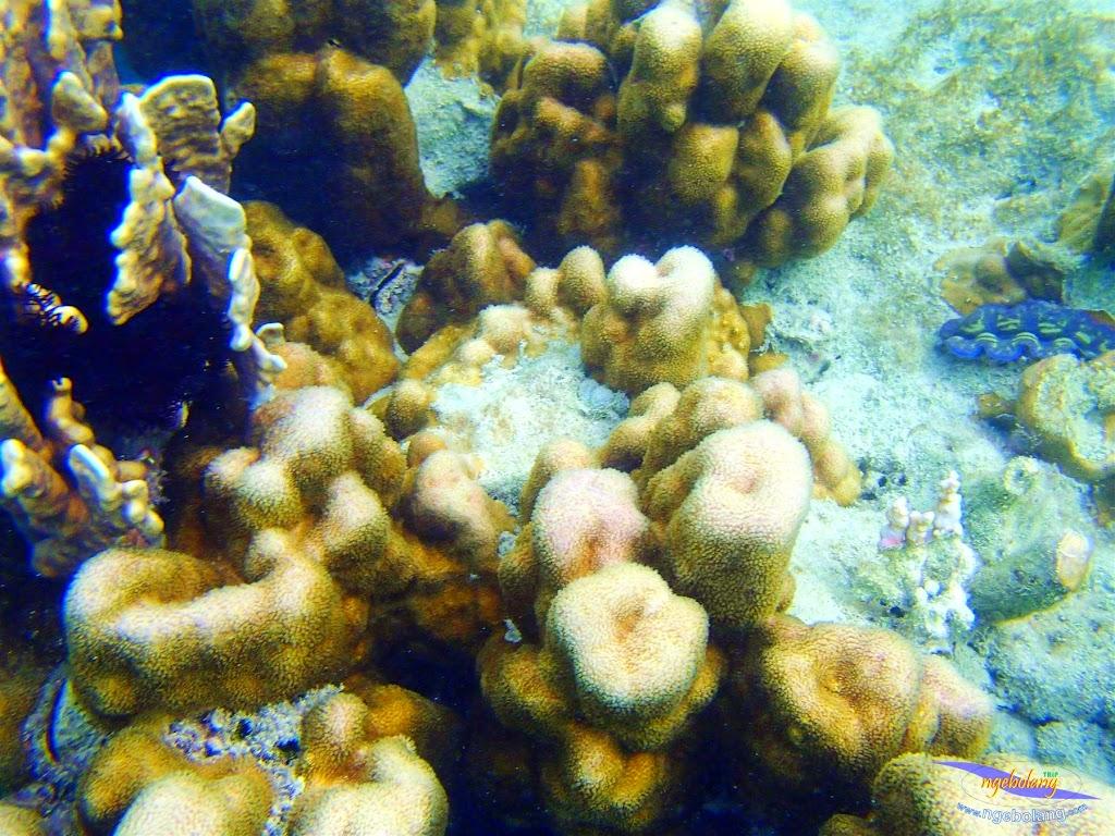 pulau harapan, 1-2 Mei 2015 panasonic  01