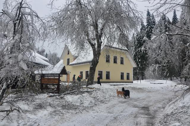 Zima-winter - DSC_3131.jpg