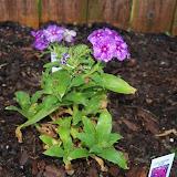 Gardening 2011 - 100_6740.JPG