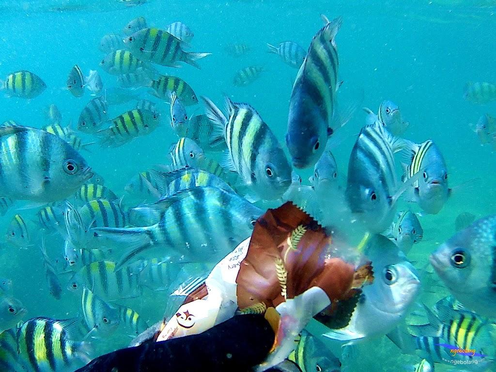 pulau harapan, 5-6 september 2015 skc 015