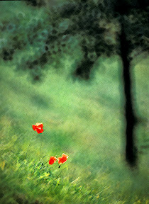 Impressions of Spring by John Powell EFIAP DPAGB BPE4