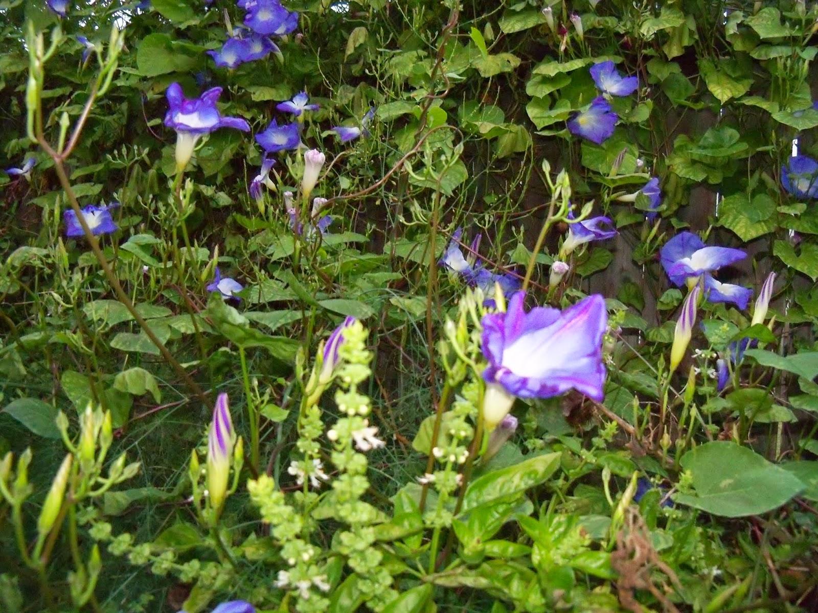 Gardening 2014 - 116_5262.JPG