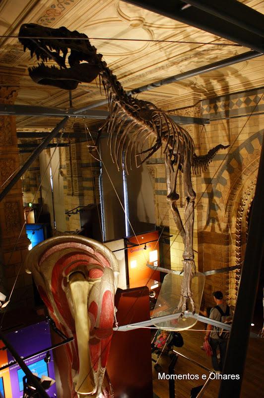 Londres, Dinossauros, Museu de história natural