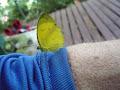 Butterfly | photo © HughStLawrence