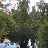 The temperate rain forest at Lake Moeraki