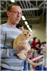 cats-show-24-03-2012-fife-spb-www.coonplanet.ru-005.jpg
