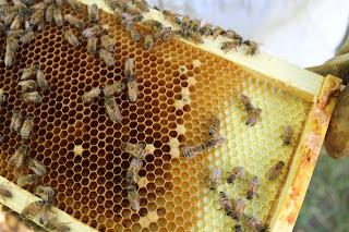 PLC Honey Fiesta 7/10/16 - IMG_3588.JPG