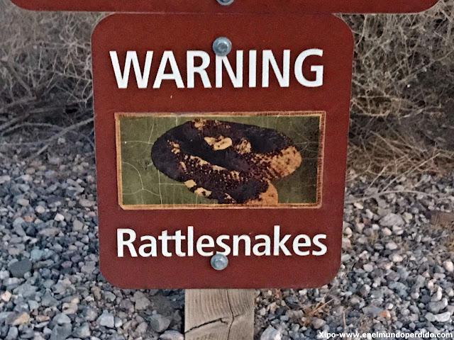 serpientes-cascabel-rhyolite.JPG