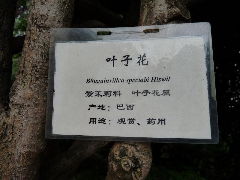 CHINE.YUNNAN.KUN MING Temple, jardin horticole,Musée des minorites - P1270317.JPG