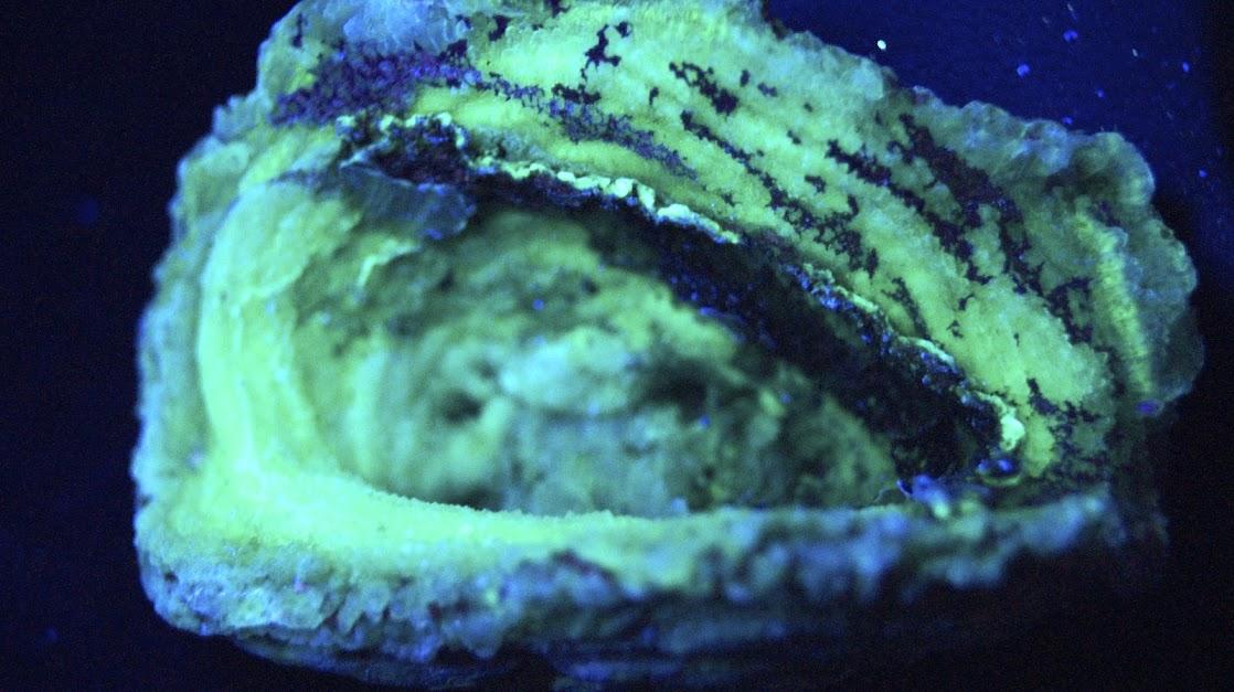 Colección de Minerales Fluorescentes - Página 3 Calcedonia+en+flor.UVc