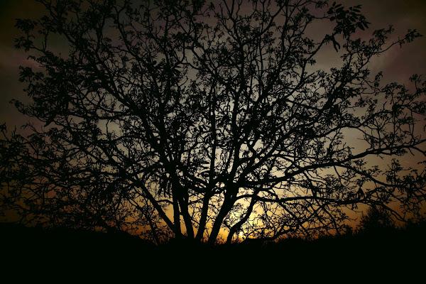 sole al tramonto di Lukasztv